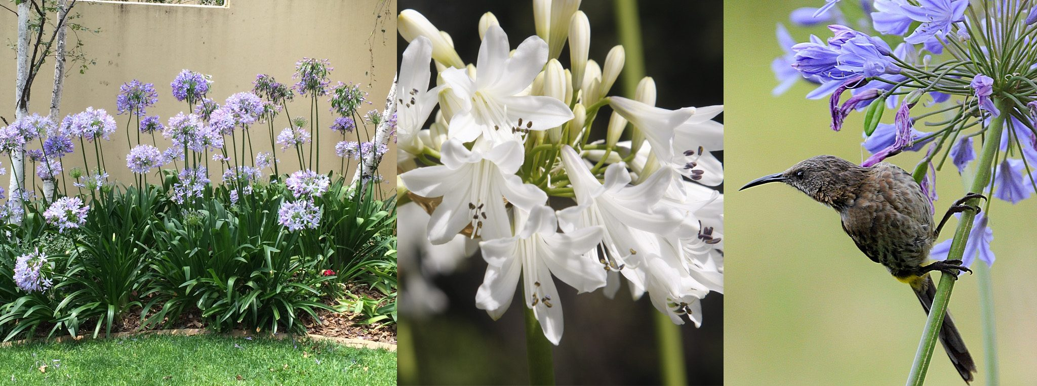 Top 14 water-wise plants for your garden - DIY - Grounded Landscaping