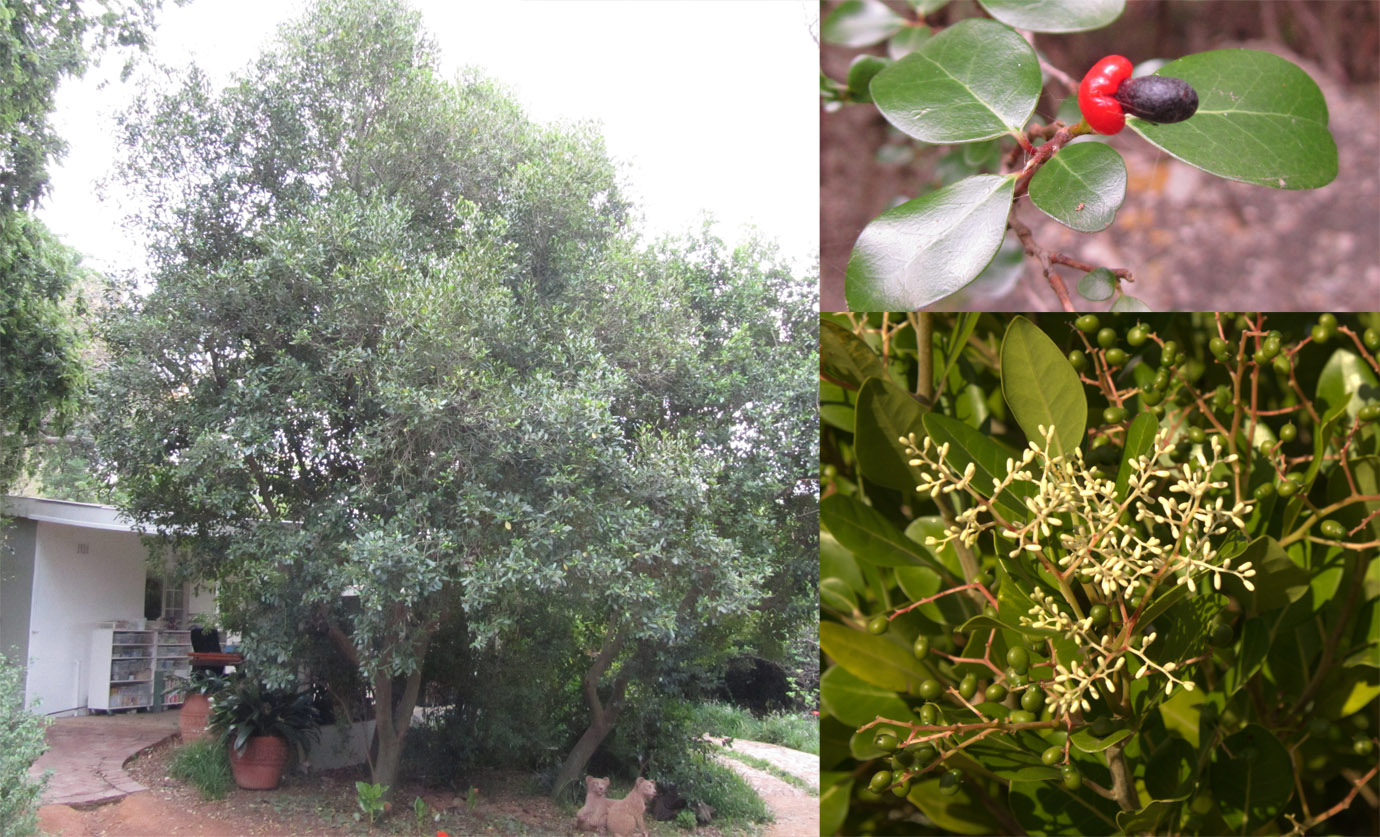 Top 10 trees to plant in a small garden - DIY - Grounded Landscaping