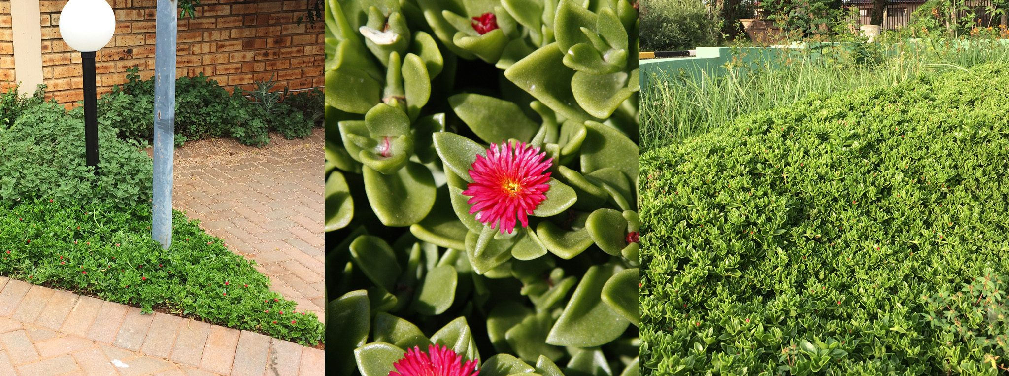 Top 14 Water Wise Plants For Your Garden Diy Grounded Landscaping