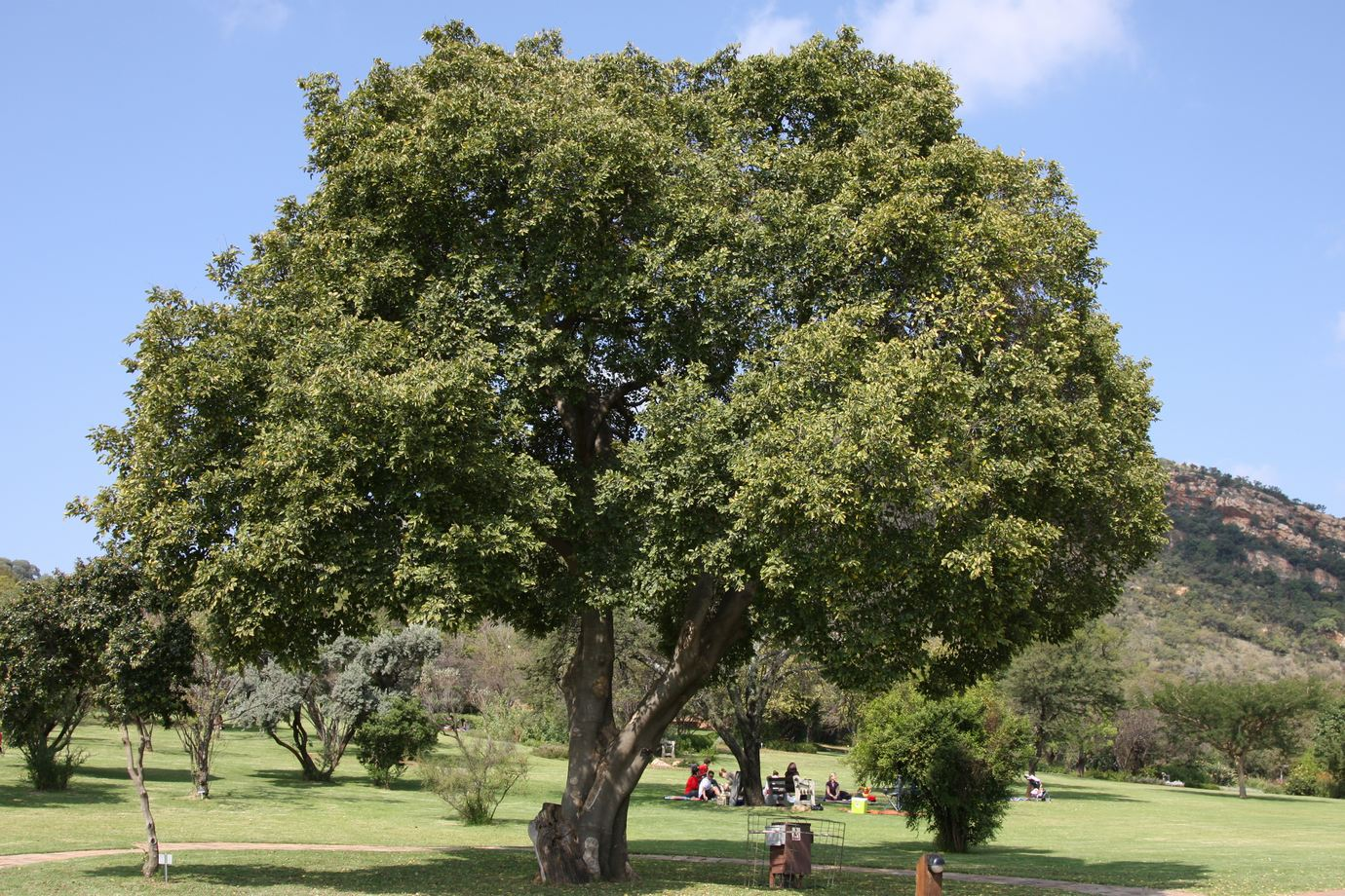 Top 10 Trees To Plant In A Small Garden Diy Grounded Landscaping